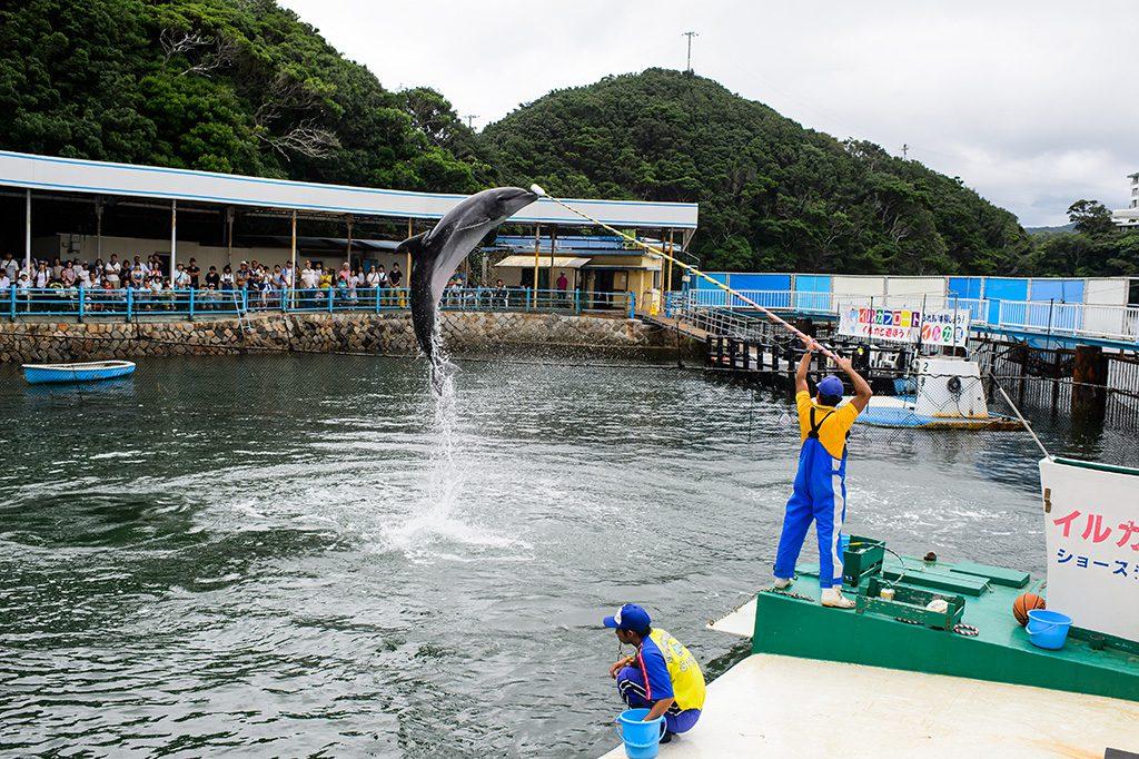 イルカのショー/鳥羽湾めぐりとイルカ島(三重県/鳥羽市)