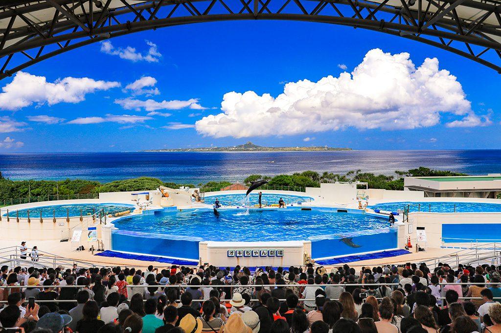 イルカショー/国営沖縄記念公園(海洋博公園)(沖縄県/本部町)