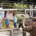 長野県のおすすめ無料スポット8選!動物園や牧場、社会科見学できる天文台など
