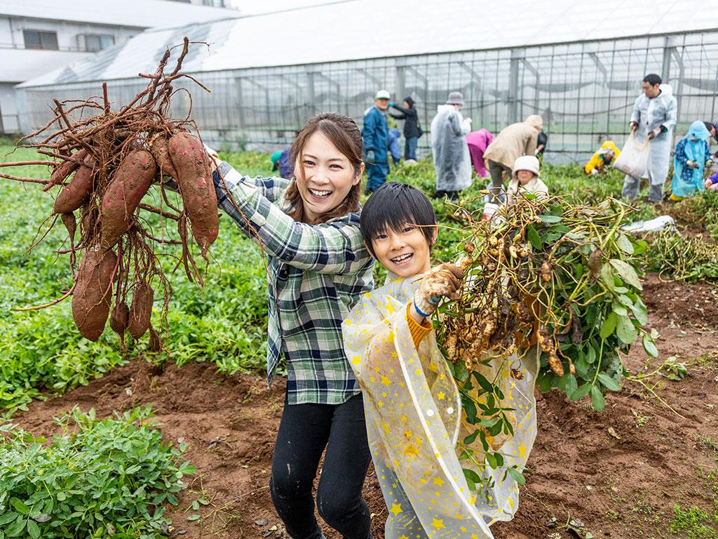野菜の収穫体験(東京都/江戸川区)