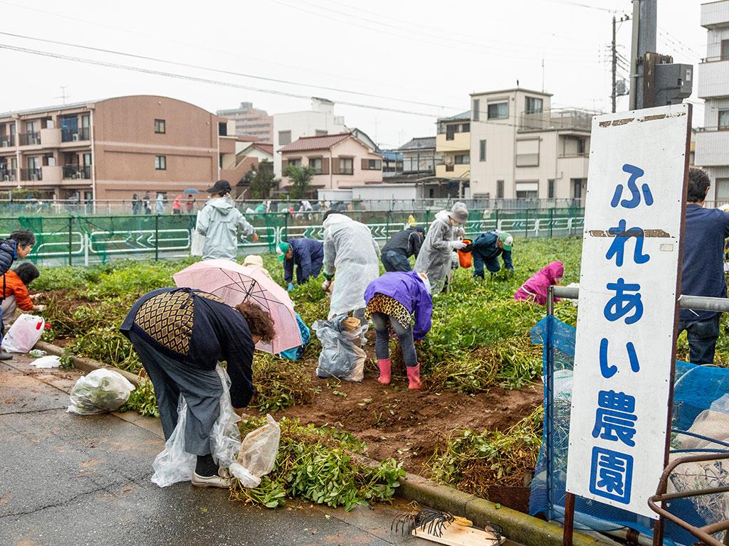 ふれあい農園で野菜の収穫体験(東京都/江戸川区)