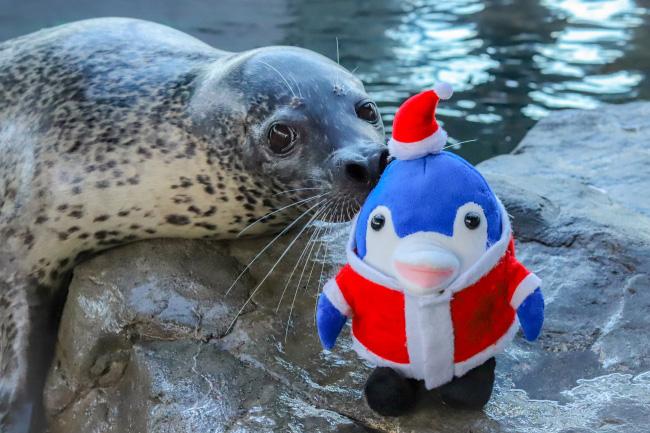 クリスマスバージョンのアザラシショー/しながわ水族館(東京都/品川区)