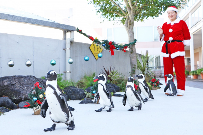 ペンギンパレード/横浜・八景島シーパラダイス(神奈川県/横浜市金沢区)