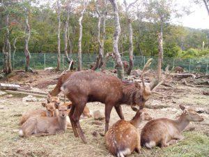 山形県のおすすめ無料スポット6選!博物館や科学館、鹿に会える公園など