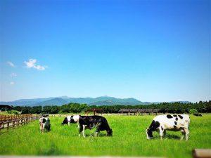 栃木県のおすすめ無料スポット6選!かっぱえびせんの工場見学や博物館、牧場など