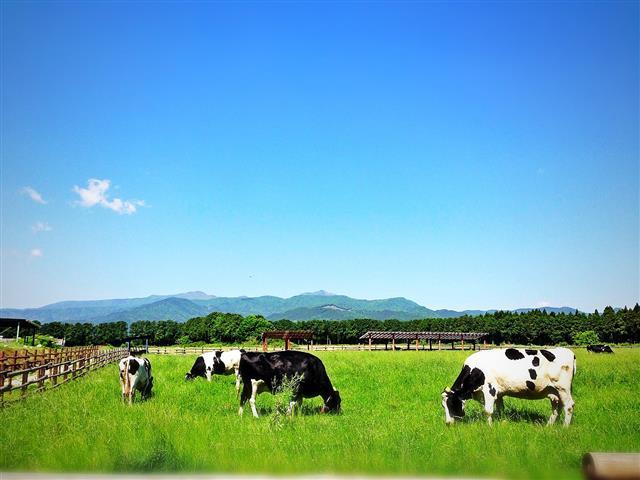 放牧場/那須 千本松牧場(栃木県/那須塩原市)