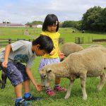マザー牧場は体験がいっぱい!エサやりや乳しぼりなど、動物とのふれあいが人気