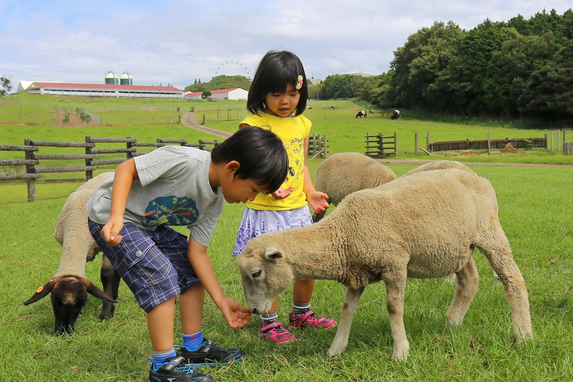 羊など動物とのふれあい/マザー牧場(千葉県/富津市)
