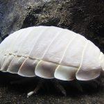 教えて深海水族館の飼育員さん!  深海魚&深海生物10のギモンQ&A