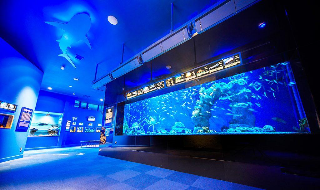 駿河湾大水槽/沼津港深海水族館(静岡県)