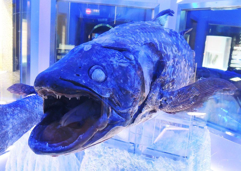 冷凍シーラカンス/沼津港深海水族館(静岡県)