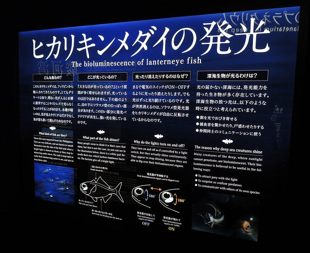 ヒカリキンメダイの発光についての解説/沼津港深海水族館(静岡県)