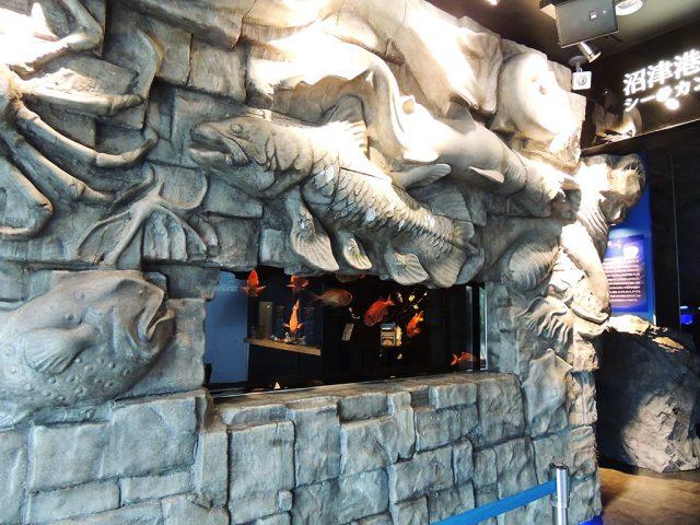 ウエルカム水槽/沼津港深海水族館 シーラカンス・ミュージアム(静岡県/沼津市)