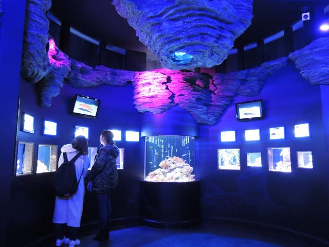 単体での水槽展示/沼津港深海水族館 シーラカンス・ミュージアム(静岡県/沼津市)