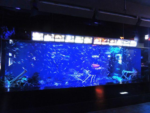 大水槽の魚たち/沼津港深海水族館 シーラカンス・ミュージアム(静岡県/沼津市)