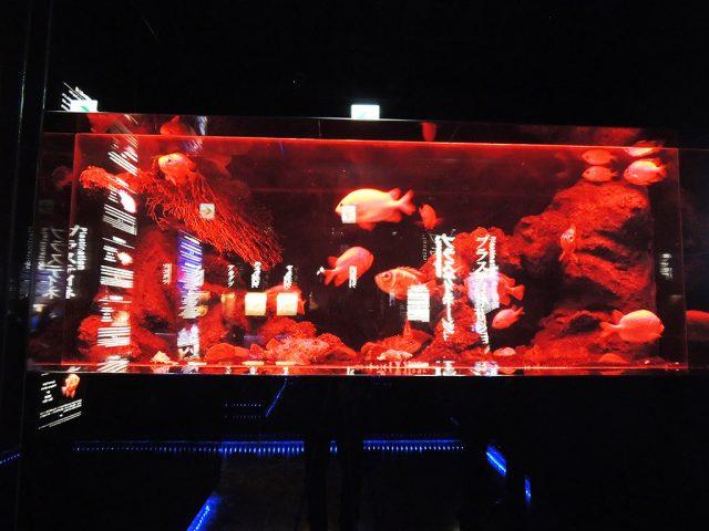 深海の光と色水槽/沼津港深海水族館 シーラカンス・ミュージアム(静岡県/沼津市)
