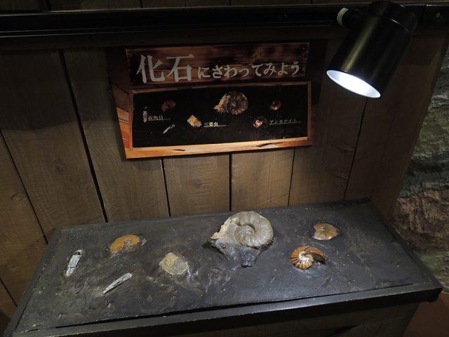 化石にさわれるコーナー/沼津港深海水族館 シーラカンス・ミュージアム(静岡県/沼津市)