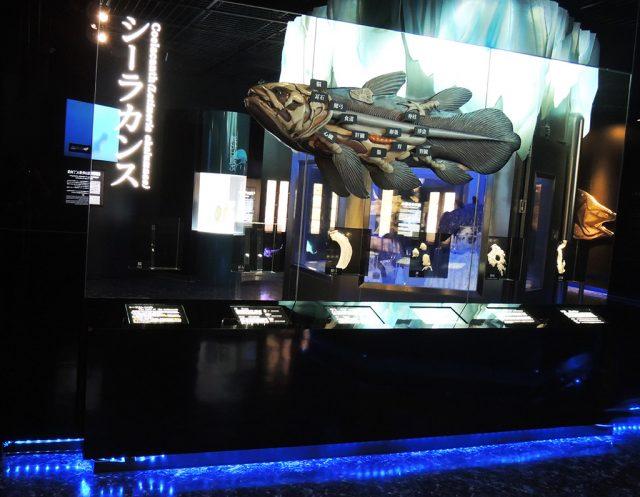 シーラカンスの臓器/沼津港深海水族館 シーラカンス・ミュージアム(静岡県/沼津市)
