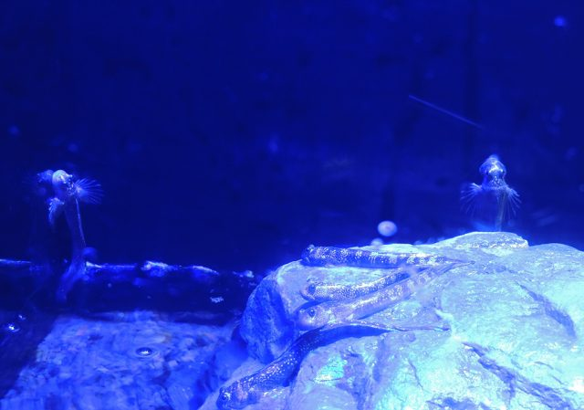 水槽のイヌザメ/沼津港深海水族館 シーラカンス・ミュージアム(静岡県/沼津市)