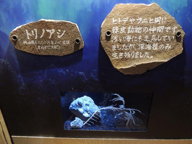 トリノアシ/沼津港深海水族館 シーラカンス・ミュージアム(静岡県/沼津市)