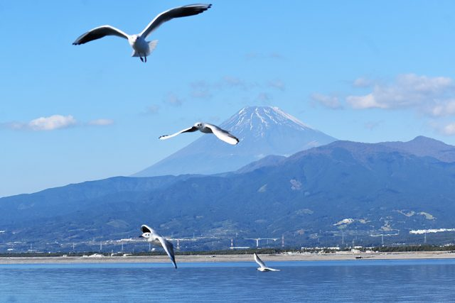 船上から見える富士山/沼津港深海水族館 シーラカンス・ミュージアム(静岡県/沼津市)