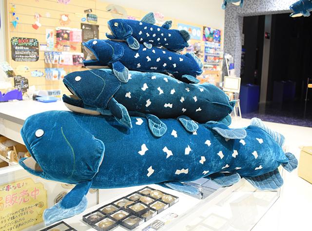 シーラカンスぬいぐるみ/沼津港深海水族館 シーラカンス・ミュージアム(静岡県/沼津市)