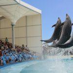 南知多ビーチランドは海洋生物とのふれ合い日本一を目指す水族館