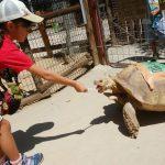 動物好きなら大満足間違いなし!しろとり動物園の魅力を紹介