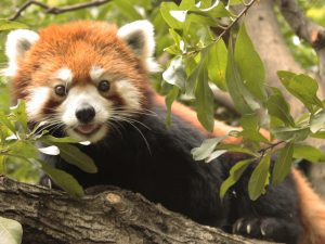 ポニー乗馬やふれあい体験も!東京都の無料の「動物園・水族館」など5選