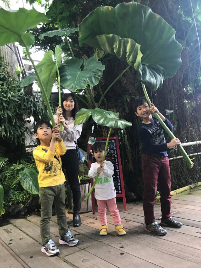 「熱帯雨林植物室」/咲くやこの花館(大阪府/大阪市)