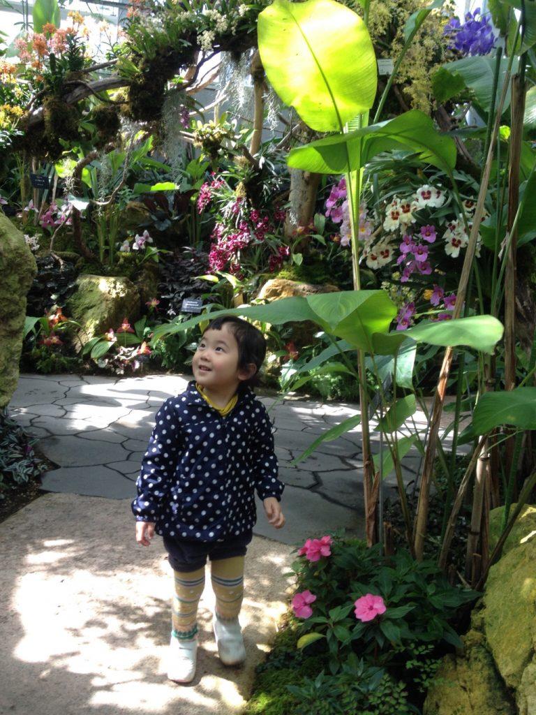 人気の温室/高知県立牧野植物園(高知県/高知市)