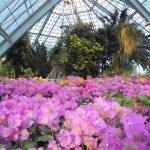 全国のポカポカ温室があるおすすめ植物園19選、お弁当持ち込みOKも多数