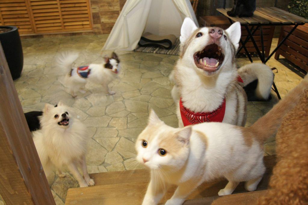 犬や猫もそろってお出迎え/動物たちが暮らす森のカフェ アニミル(大阪府/大阪市)