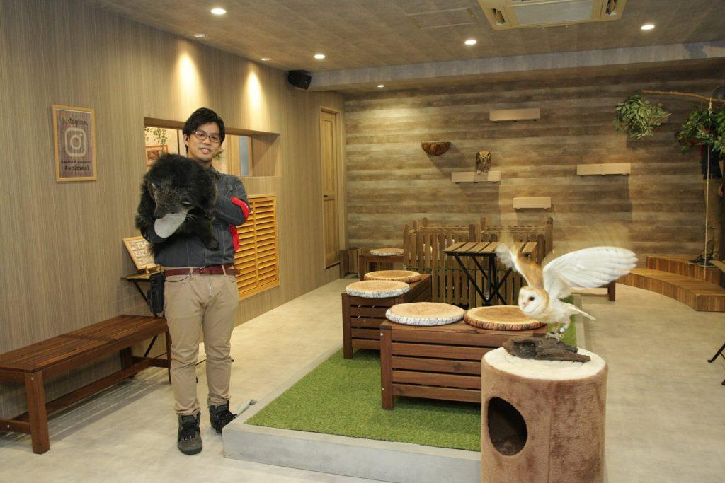 ビントロングやフクロウのいるキャンプタイム/動物たちが暮らす森のカフェ アニミル(大阪府/大阪市)