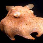 飼育員さん直撃! 沼津港深海水族館を徹底解剖!! 深海魚グッズも要チェック