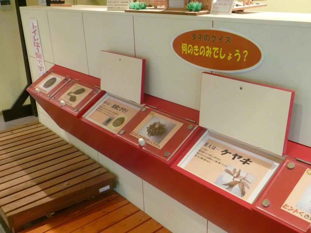 2階「不思議ボックス」/渋谷区ふれあい植物センター(東京都/渋谷区)