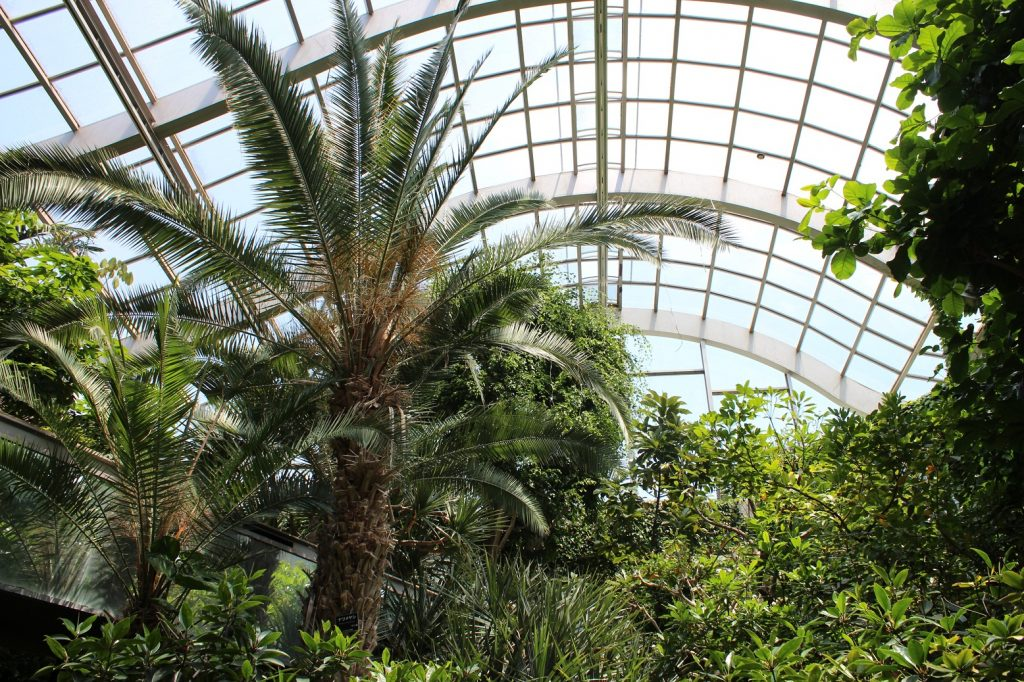 地下1階から地上2階まで吹き抜けの温室/板橋区立熱帯環境植物館(東京都/板橋区)