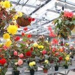 冬でもトロピカル気分!関東でおすすめの温室がある植物園7選