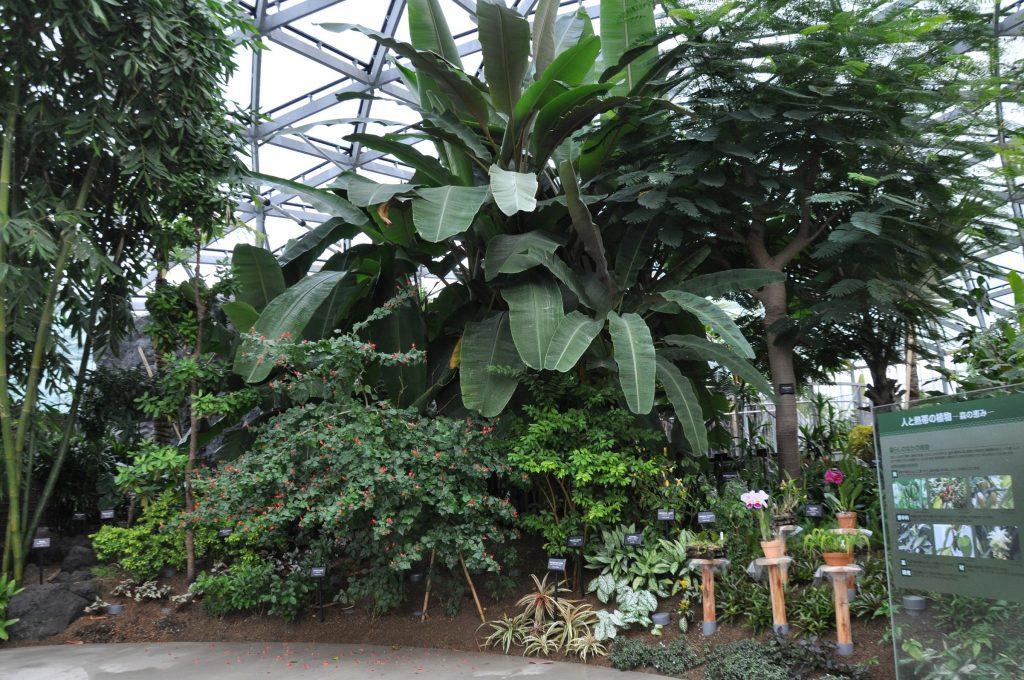 人と熱帯植物コーナー/新宿御苑 大温室(東京都/新宿区)