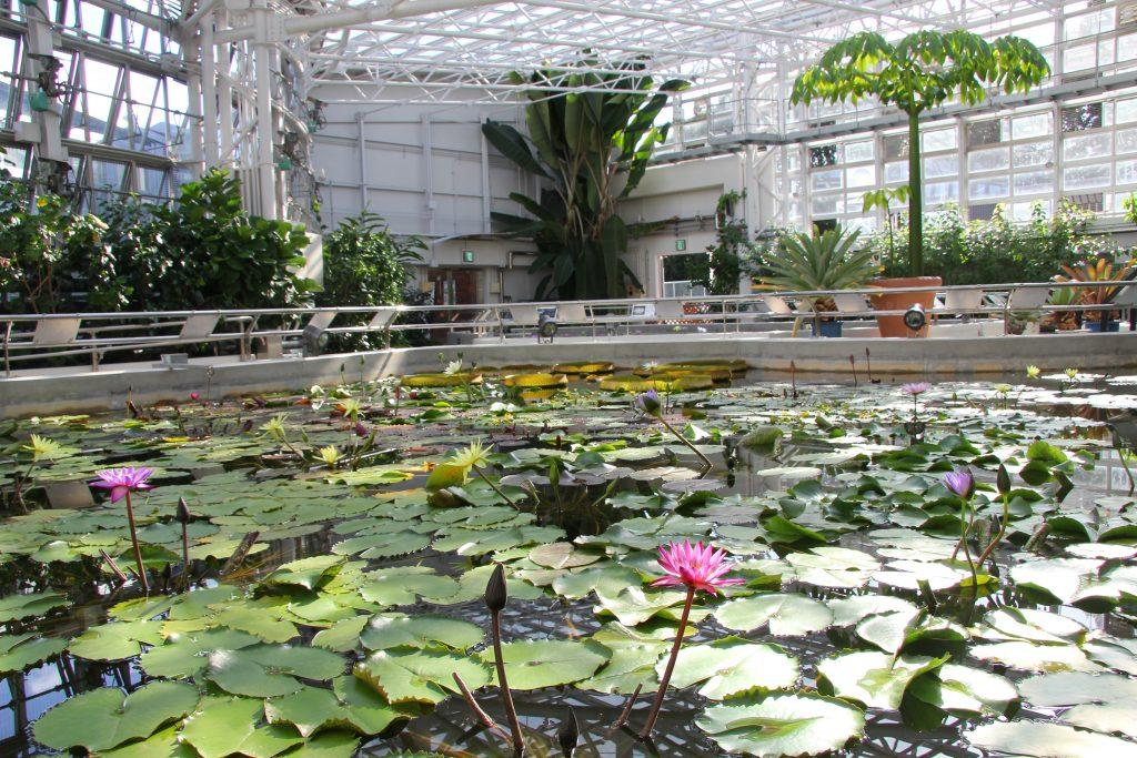 熱帯スイレン室/神代植物公園(東京都/調布市)