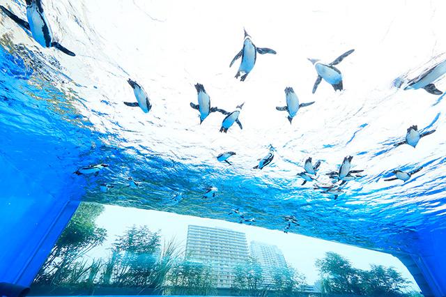 天空のペンギン/サンシャイン水族館(東京都/豊島区)