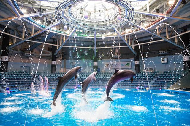 イルカやアシカよるショーやパフォーマンス/マクセル アクアパーク品川(東京都/港区)