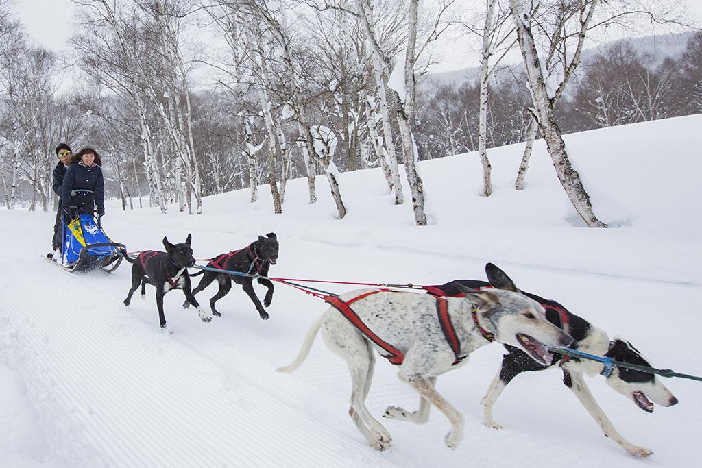犬ぞり体験/水上高原スキーリゾート(群馬県/利根郡みなかみ町)