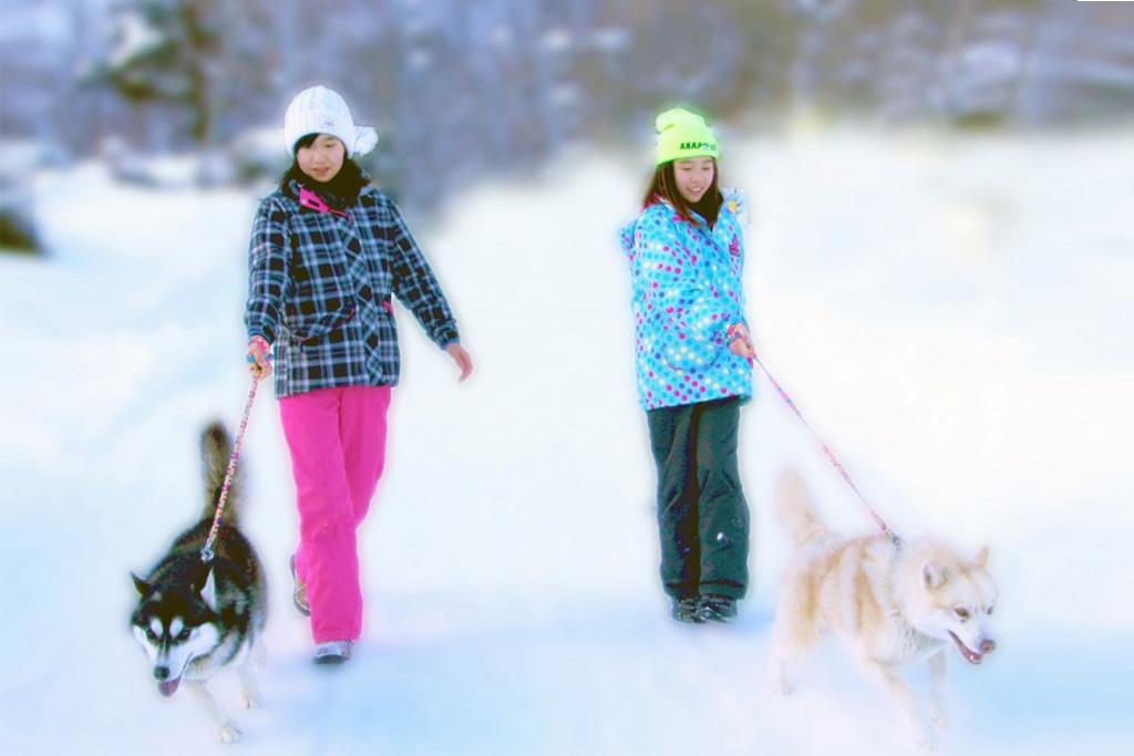 雪の中をハスキー犬と遊ぶアニマルグランピング/ノースサファリサッポロ(北海道/札幌市)