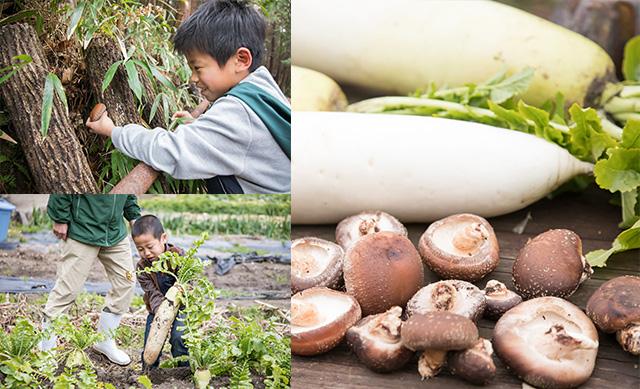 シイタケ狩りやダイコン収穫をする子ども/農家民宿 具座(佐賀県/佐賀市)