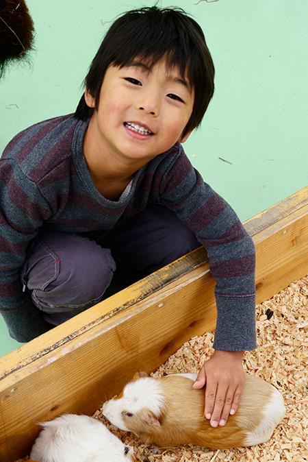 ふれあいコーナーのモルモットに触る子ども/江戸川区自然動物園(東京都)