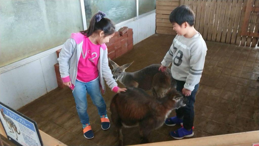 珍しい動物たちとツーショット撮影などでふれあえる/インナー・シティー・ズー ノア(神奈川県/横浜市)