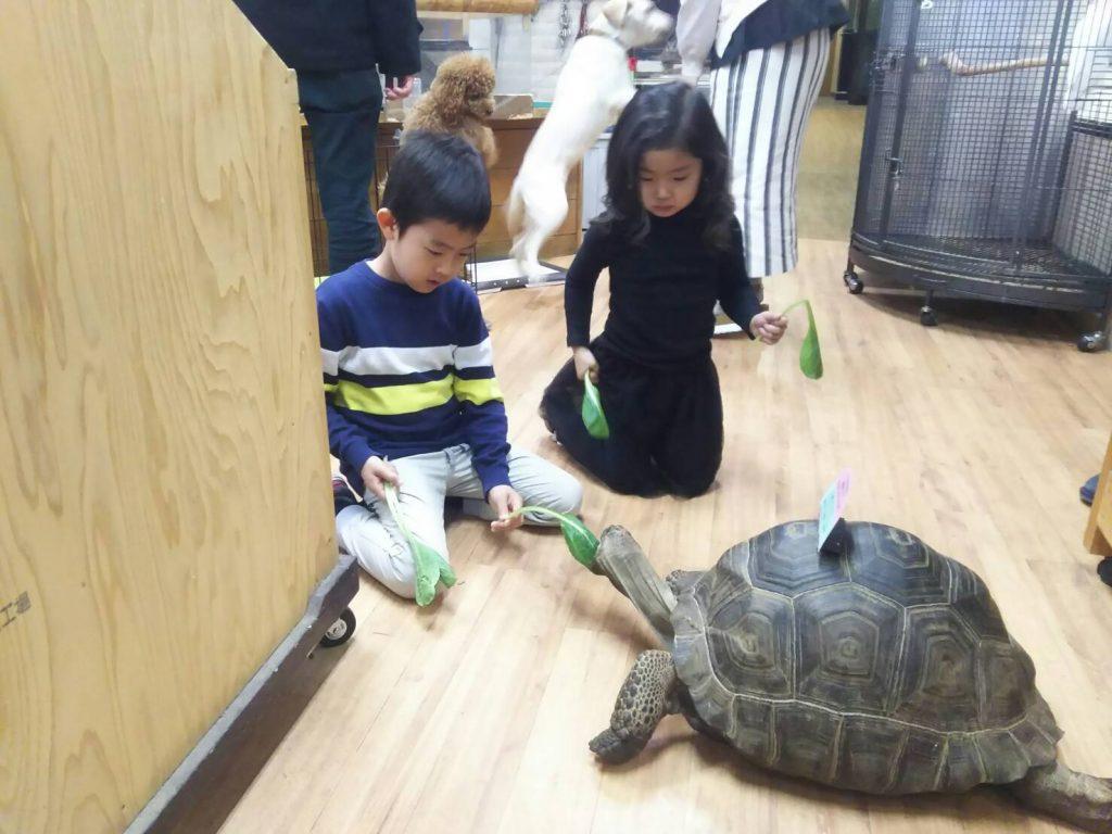 ゾウガメへのエサやり体験/インナー・シティー・ズー ノア(神奈川県/横浜市)