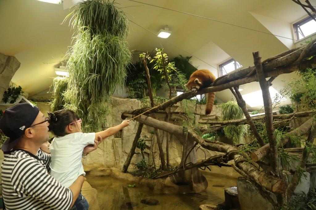 レッサーパンダについての解説やエサやり体験/那須どうぶつ王国(栃木県/那須町)