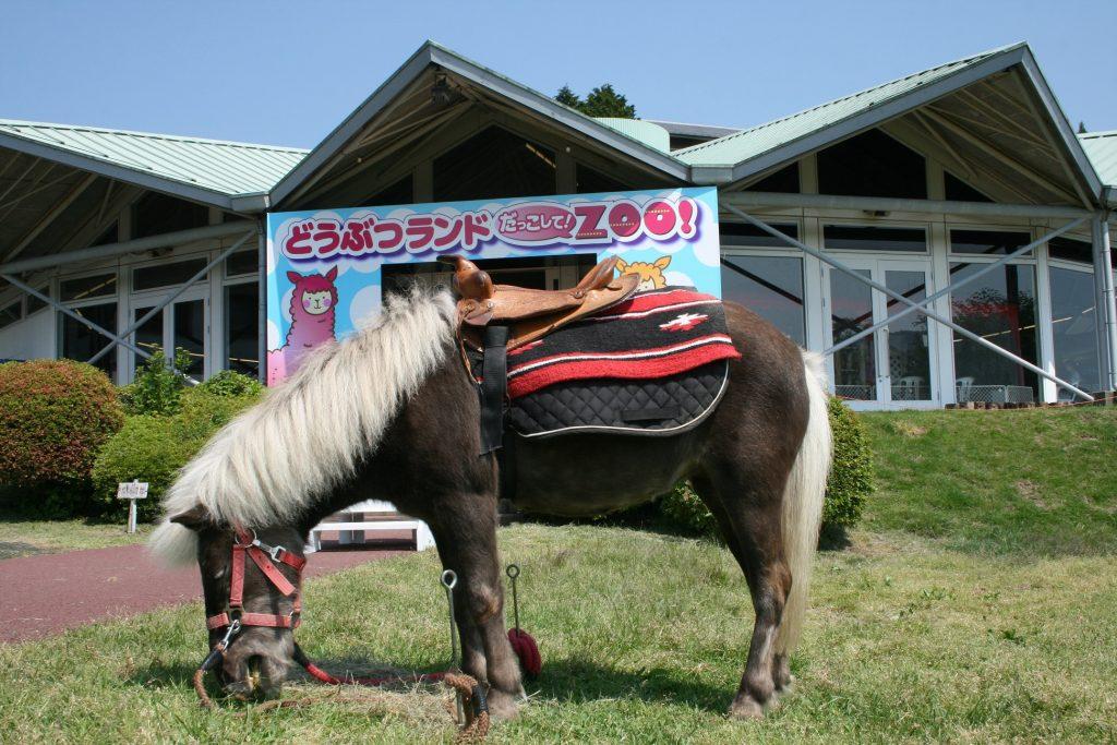 施設外観とポニー/箱根園(神奈川県/箱根町)
